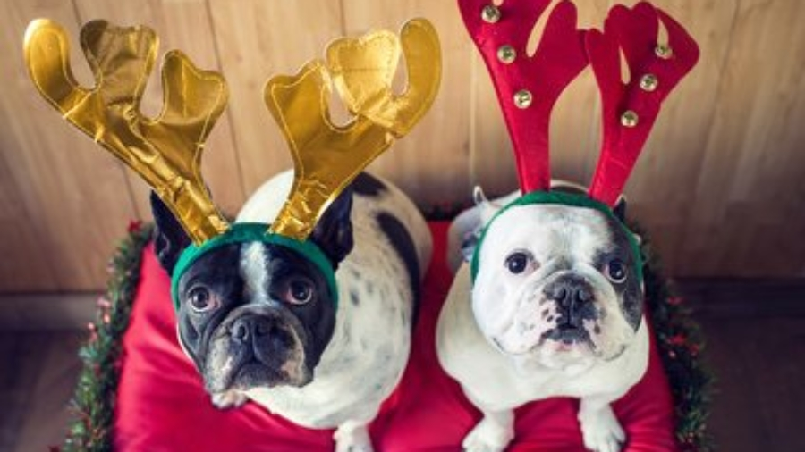 Christmas-cute-dogs